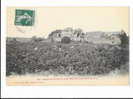 Ruines De Saint-Macé Près Trèves Cunault - édit. Fr. Voelcker 140 + Verso - Autres Communes