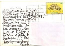 26---Tunisie---tortue - Turtles