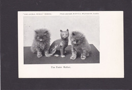 Cat Card -   The Foster Mother.   RSPCA. - Cats