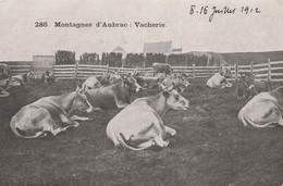 CPA  Aveyron Montagnes D' AUBRAC N° 286 Vacherie Vache Bovin 2 Scans - Sin Clasificación