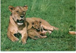 KENYA : Lioness With Cub - Kenya