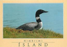 Islande - Himbrimi - Plongeon Imbrin - Oiseaux - Carte Neuve - Iceland - CPM - Voir Scans Recto-Verso - Iceland