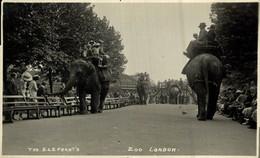 RPPC THE  ELEPHANT'S ZOO LONDON EXHIBITION    L'ÉLÉPHANT ELEFANT ELEFANTE  Part Of The Donkeycollection - Elefanti