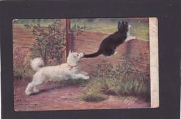 Dog Card -   Dog Biting Cats Tail.    1909. - Perros