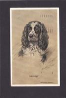 Dog Card -   Springer Spaniel.   Dignity.    1957. - Perros