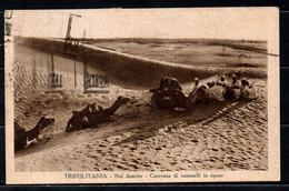 Tripolitania - Carovana Di Cammelli In Riposo - 1935 - Libye