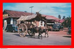 CPSM/pf MALACCA. Ancien Mode De Transport, Charette Avec Vache, Ancienne Voiture Peugeot. ...E015 - Malaysia