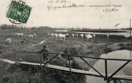 E 4601 - Vichy (03) Les Bords De L'Allier Et Vaches Dans Le Champ - Vichy