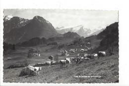 27216 - Les Sciernes Au Printemps Troupeau - FR Fribourg