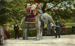 Elephant 2d All The Way Zoological Gardens London  Part Of The Donkeycollection - Olifanten