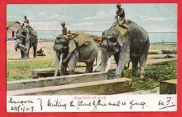 MYANMAR   BURMA   ELEPHANTS AT WORK       ETHNIC INTEREST   Pu 1907   SEA POST OFFICE - Myanmar (Burma)
