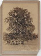 PHOTO XIX ème Siècle LIMOUSIN HAUTE VIENNE Charrette De Foin  Grand Arbre Verso Inscription Vue Prise De TRANSFORET 1887 - Old (before 1900)