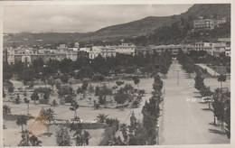 Tenerife Postcard Santa Cruz Parque Municipal - Tenerife