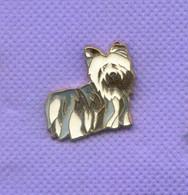 Rare Pins Chien Yokshire R669 - Animales