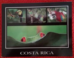 COSTA RICA, NATURE, OISEAUX, TUCAN, ARAO MACAO, PIEROPSITTA - Costa Rica