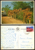 Zambia Lions Kruger National Park Nice Stamp   #29052 - Zambia