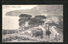 Cartolina Levanto, Salita Al Castello, Maultiere Auf Dem Weg - Altre Città