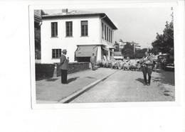 28081 -   Leysin Berger Et Son Troupeau De Moutons Traversant Leysin - VD Vaud