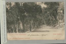 CONSTANTINOPLE   Le Bois De Halki  1906 Edit. Max Fruchtermann (Mai 2021 165) - Turchia
