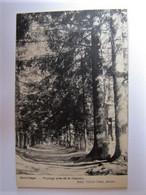 BELGIQUE - LUXEMBOURG - SAINT-LEGER - Paysage Près De La Chapelle - 1911 - Saint-Leger