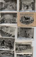 Pochette 10 Photos - Musée Africain Gourgaud - Ile D'Aix - Rapaces - Gorilles - Okapi - Gazelles - Oiseaux D'afrique - - Other