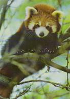 Zoo / Tiergarten / Wildpark (D-A362) - Sonstige