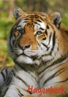 Zoo / Tiergarten / Wildpark (D-A361) - Sonstige