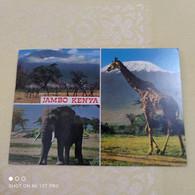 Jambo Kenya - Kenya