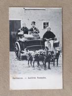 Charrette à Chiens- Bruxelles–laitières Flamandes - Dogs