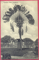 Travellers Palm, Close To The Reservoir Singapore_(PCard457) CPA Vintage - Singapore