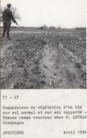 Champagne 17 - Essais Agricoles - Exploitation Ferme M. Leteau - 1 Photographie - 1966 - Autres Communes