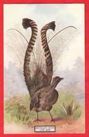 AUSTRALIA   LYRE BIRD   AUSTRALIAN FAUNA AND FLORA SERIES - Outback