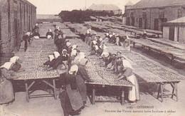 Quiberon, Animée, Femmes Des Usines Mettant Leurs Sardines à Sécher - Quiberon