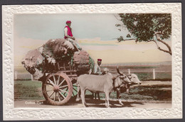 INDIA, A Cotton Cart With Oxen   - Tinted Real Photo Postcard - India