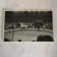 Circus - Cirque // Carte Photo - RPPC To Identify, Prob. Belgie No. 2. // Horse Act 19?? - Circo