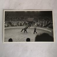Circus - Cirque // Carte Photo - RPPC To Identify, Prob. Belgie No. 3. // Horse Act 2.19?? - Circo