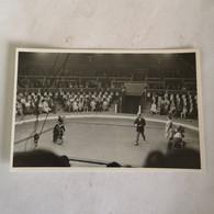 Circus - Cirque // Carte Photo - RPPC To Identify, Prob. Belgie No.7. // Bear Cycle Act.19?? - Circo
