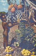 L'AFRIQUE EN COULEURS - Enfants Aux Fruits - Unclassified