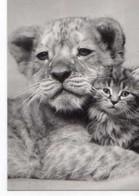 YLLA Chaton Et Lionceau - Andere Fotografen