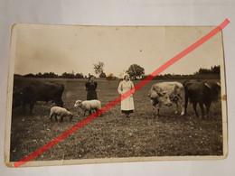 Photo Vintage. Original. Agriculture. Fille Et Vaches, Moutons. Lettonie D'avant-guerre - Oggetti