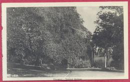 Botanical Gardens Singapore (PCard551) CPA Vintage - Singapore