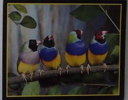 Petit Calendrier De Poche 1989 Oiseau Diamant De Gould Australien - Pessines Charente Maritime - Petit Format : 1981-90