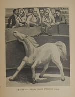 Picasso. Reproduction. 1938. Le Cheval Blanc Dans L'Arène. - Estampes & Gravures