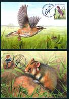_TH_ Belarus 2021 Europa Aquatic Warbler Hamster Fauna Bird Mammal 2 MaxiCards MC - Otros