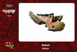 Set 3 Cartes Postales, Hommes Prehistoriques, Human Fossil Sites, Nakali (Kenya), Nakalipithecus Nakayamai - History