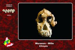 Set 3 Cartes Postales, Hommes Prehistoriques, Human Fossil Sites, Woranso-Mille (Ethiopia), Australopithecus Anamensis - History