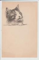 THEME CHAT - DESSIN A L'ENCRE SUR CARTON FORMAT CARTE POSTALE ANCIENNE - CAT - Sonstige