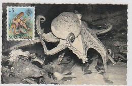 Seicheles & Maxi, Dierentuin Antwerpen, Anvers, Octopus Vulgaris (113) - Seychelles (1976-...)