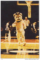 "Washington DC - GEORGETOWN UNIVERSITY - ""Jack The BULLDOG"", The Hoya's Mascot - Washington DC"