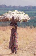 BURUNDI - Transport De Coton - Burundi